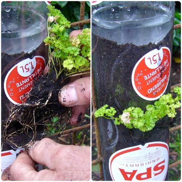 λαχανόκηπος μπουκάλια