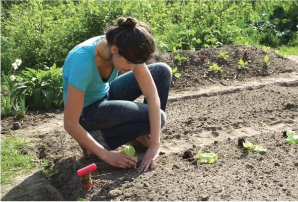 λαχανόκηπος λωρίδες φύτευσης έδαφος μέθοδος λαχανικά κήπος κηπουρός
