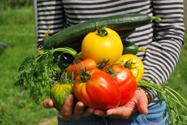 Gardener Vegetable Garden λαχανόκηπος λαχανικά ντομάτες αγγούρια